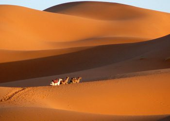 Desert Day Trip from Ouarzazate